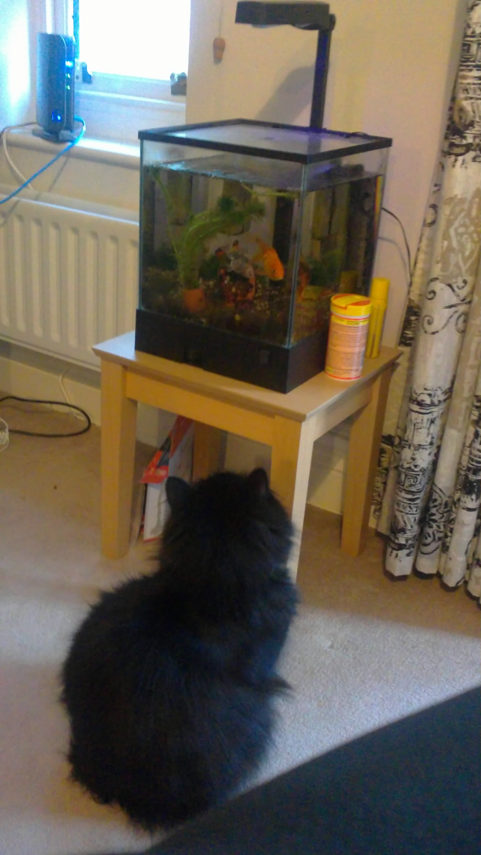 Cedric watching fish